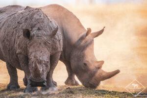 My Wildlife au Kenya