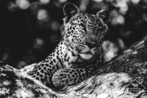 My wildlife en Afrique du Sud